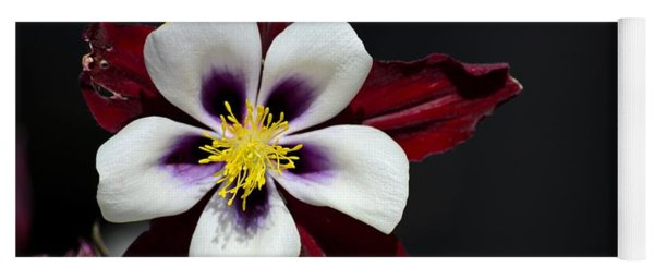 Beautiful White Petal Yellow Stamen Purple Shades Aquilegia Columbine Flower Yoga Mat