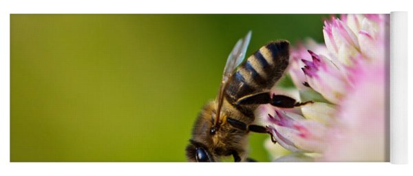Yoga Mat featuring the photograph Bee Sitting On A Flower by John Wadleigh