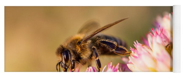 Yoga Mat featuring the photograph Bee Sitting On Flower by John Wadleigh