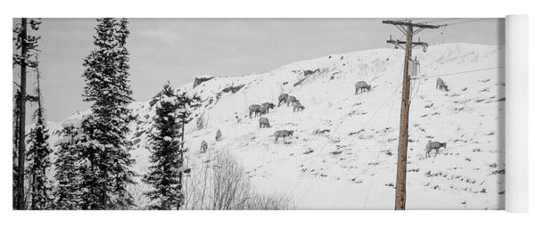 Big Horn Sheep Hinton Hillside Yoga Mat