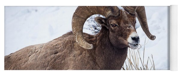 Bighorn Ram Yoga Mat