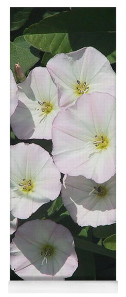 White Trumpet Wildflower In Bloom On The Farm Yoga Mat