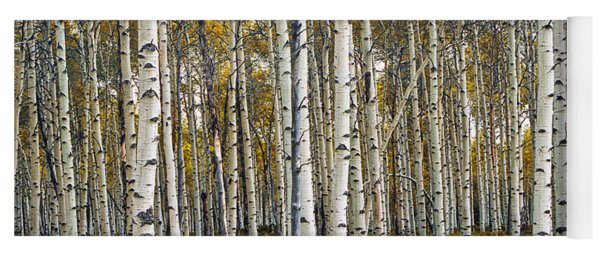 Aspen Trees In Autumn Yoga Mat