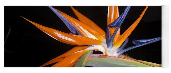 Bird Of Paradise Beauty 4 Yoga Mat