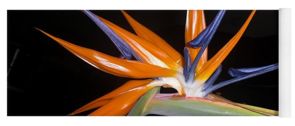 Bird Of Paradise Beauty 4 Yoga Mat