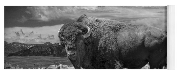 Black And White Photograph Of An American Buffalo Yoga Mat