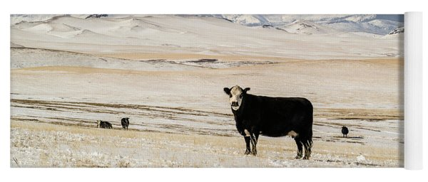 Black Baldy Cows Yoga Mat