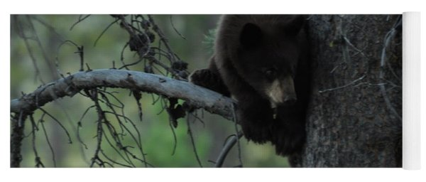 Black Bear Cub In Tree Yoga Mat