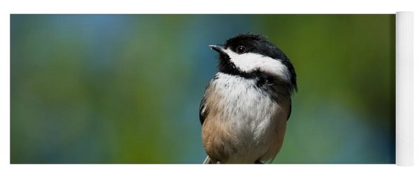 Black Capped Chickadee Perched On A Branch Yoga Mat