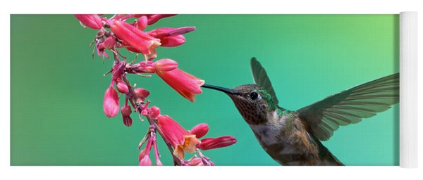 Black Chinned Hummingbird Yoga Mat