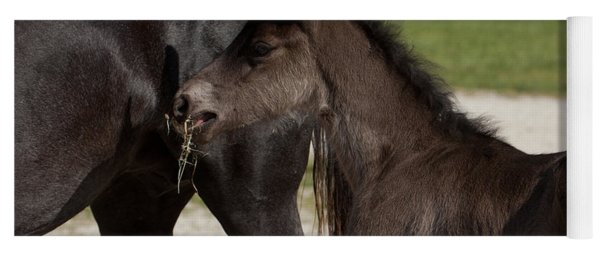 Black Foal Yoga Mat