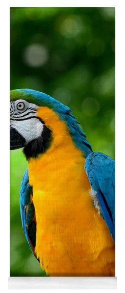 Blue And Yellow Gold Macaw Parrot Yoga Mat