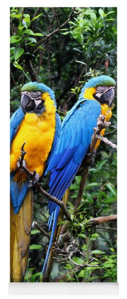 Blue And Yellow Macaws Yoga Mat
