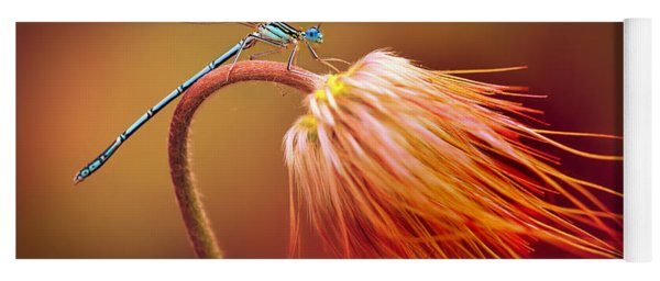 Blue Dragonfly On A Dry Flower Yoga Mat