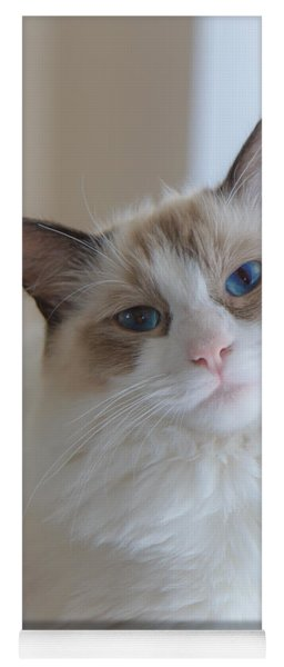 Blue-eyed Ragdoll Kitten Yoga Mat