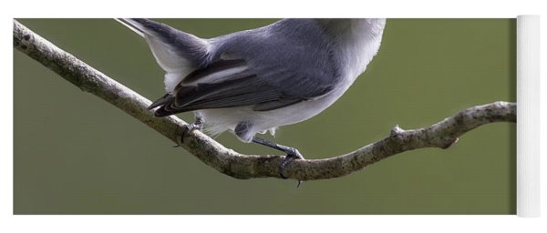 Blue-gray Gnatcatcher Yoga Mat