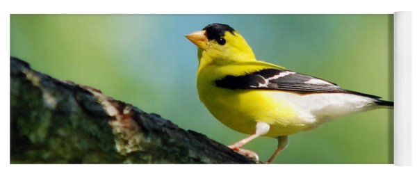 Yoga Mat featuring the photograph Blue Heart Goldfinch by Christina Rollo