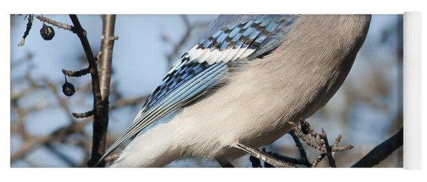 Blue Jay.. Yoga Mat