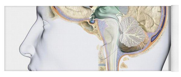 Brain In Cross Section Yoga Mat