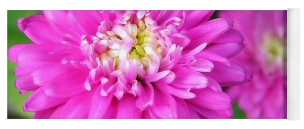 Yoga Mat featuring the photograph Bright Pink Zinnia Flowers by Christina Rollo