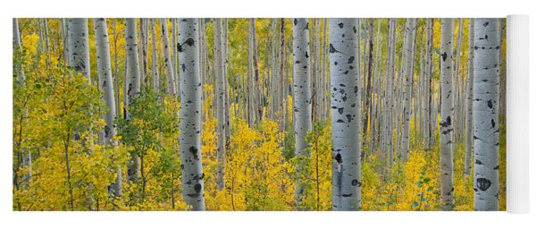 Yoga Mat featuring the photograph Brilliant Colors Of The Autumn Aspen Forest by Cascade Colors
