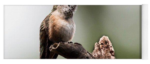 Broad-tailed Hummingbird Sit  Yoga Mat