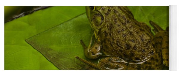 bull frog on a Lilly pad Yoga Mat