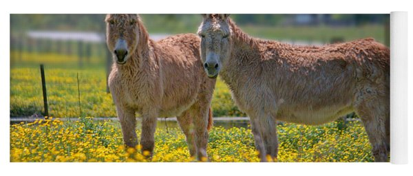 Burros In The Buttercups Yoga Mat