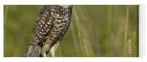 Burrowing Owl Stare Yoga Mat