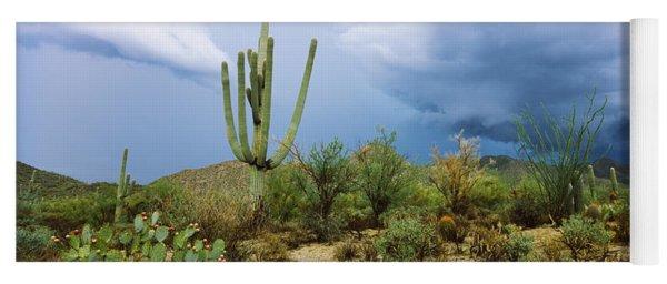 Cacti Growing At Saguaro National Park Yoga Mat