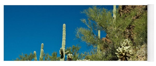 Cactus Landscape 1 Yoga Mat