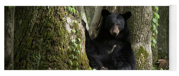 Cades Cove Bear Yoga Mat