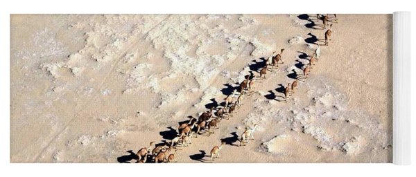 Camels Walking In Desert Yoga Mat