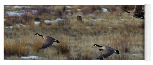 Canadian Geese In Flight Yoga Mat