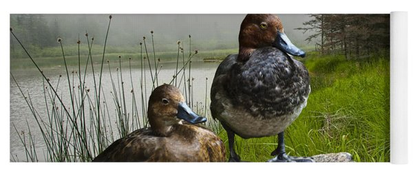Canvasback Duck Pair By A Pond Yoga Mat