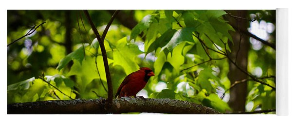 Cardinal In The Trees Yoga Mat