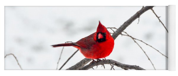 Cardinal On A Branch  Yoga Mat