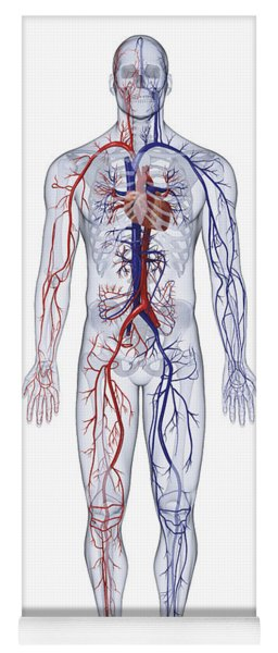 Cardiovascular System, Human Body Yoga Mat