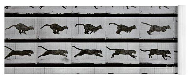 Cat Running Yoga Mat