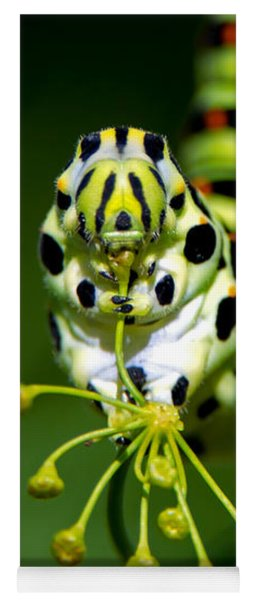 Caterpillar Of The Old World Swallowtail Yoga Mat