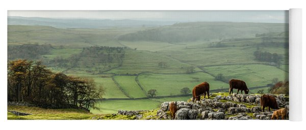 Cattle In The Yorkshire Dales Yoga Mat