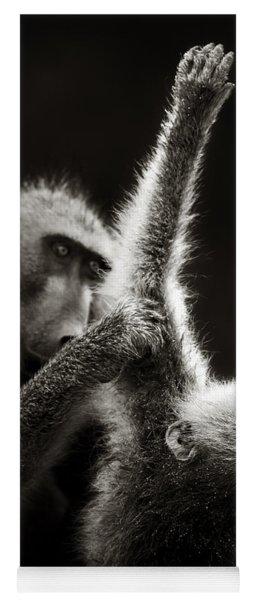 Chacma Baboons Grooming Yoga Mat