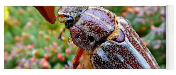 Chafer Beetle On Medusa Succulent 2 Yoga Mat