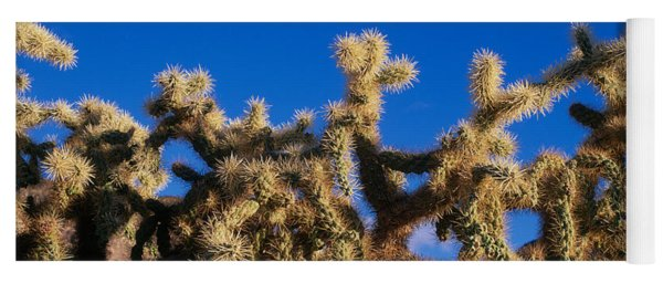 Chainfruit Cholla Cactus Saguaro Yoga Mat