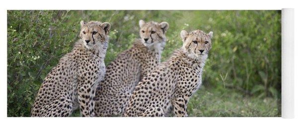 Cheetah Acinonyx Jubatus Cubs Yoga Mat