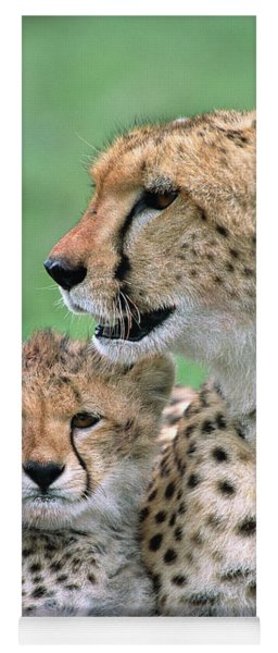 Cheetah Mother And Cub Yoga Mat