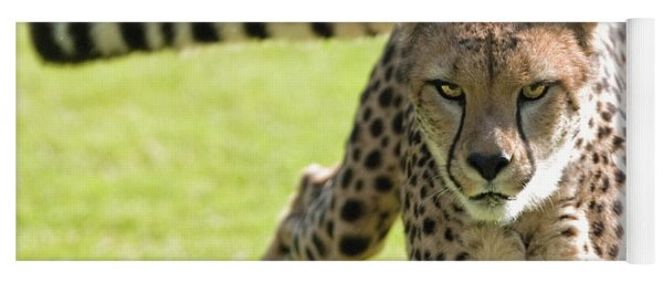 cheetah Running Portrait Yoga Mat