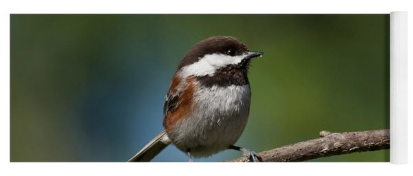 Chestnut Backed Chickadee Perched On A Branch Yoga Mat