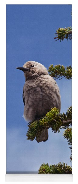 Clark's Nutcracker In A Fir Tree Yoga Mat