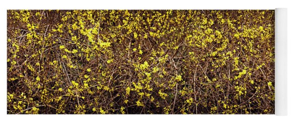 Close-up Of A Forsythia Flowers, North Yoga Mat